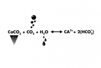 http://studiothomasvailly.com/files/gimgs/th-10_42_07-caco3-chemical-formula.jpg